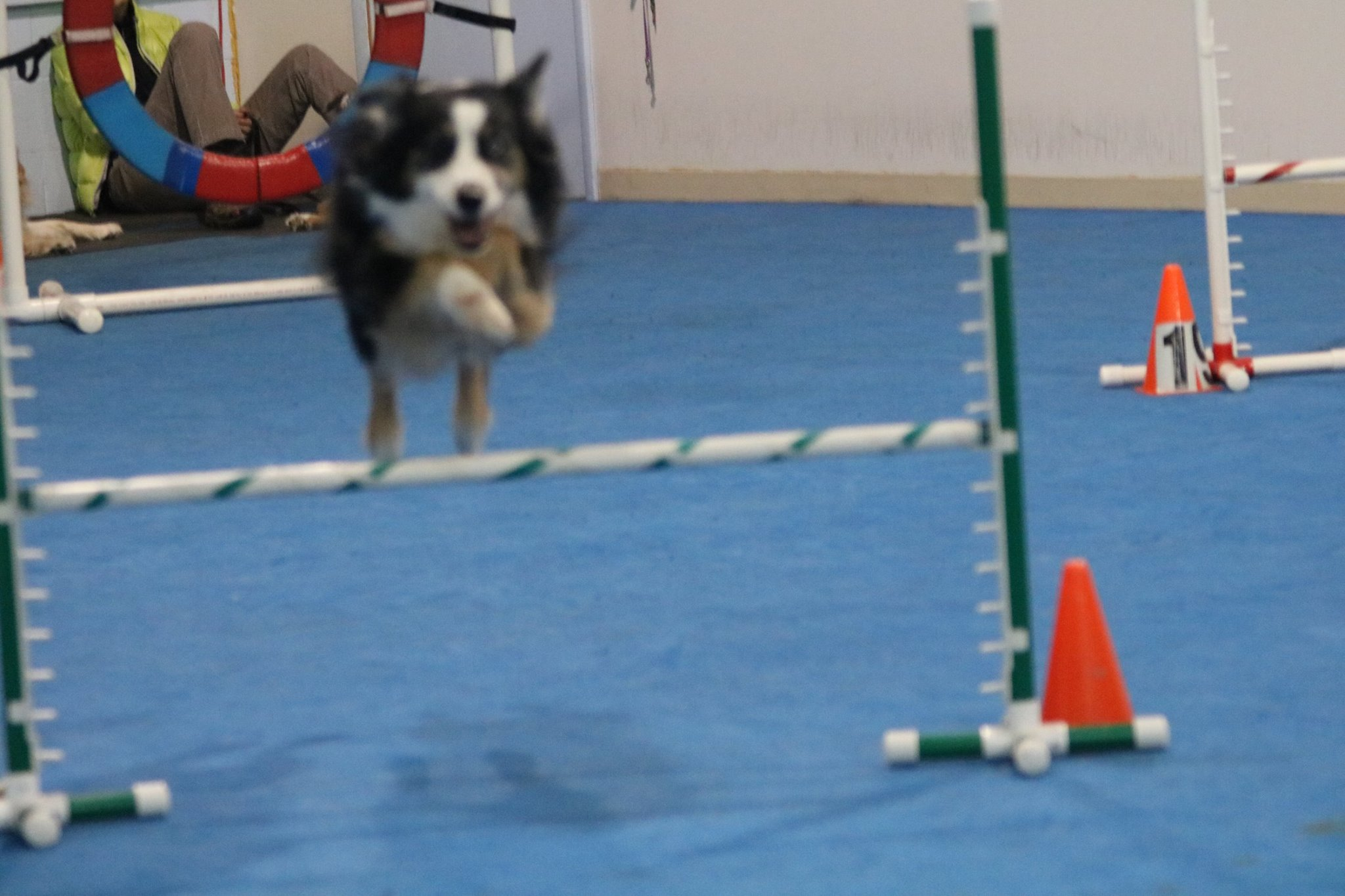 Dog Training Novi Mi